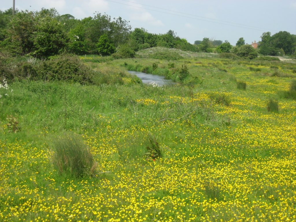 A beautiful middle river meadow on the Glaven