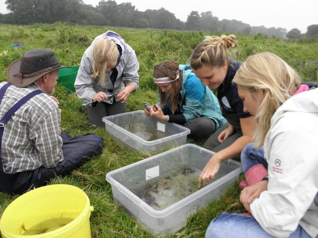 "Glaven crayfish measuring team 2014 - Left to Right: Ian Patmore (UCL), Emily Smith (UCL), Emma Wiik (""Wikepedia"" UCL), Emily Long (NRT) and Lucy Roberts (UCL). Thanks to Amy Prendergast for the photo"